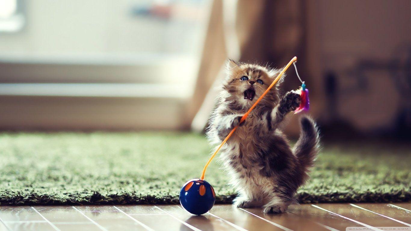 Wallpaper De Gatos Para Descargar Con Fondos De Pantalla Hd Para Pc E Wallpaper De Gatos Para Descargar Fondos De Pa Cute Kittens Gambar Kucing Lucu Bayi Hewan