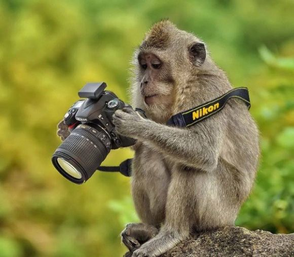 Image result for animals taking photos