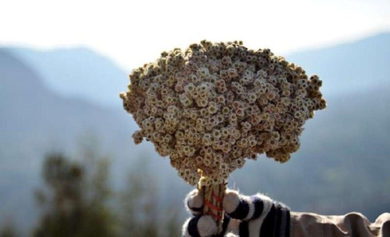 Pin Di Tentang Bunga