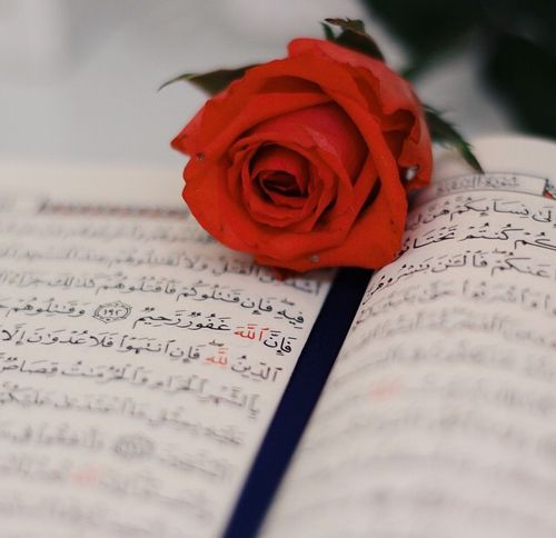 Quran And Rose Image Quran Wallpaper Quran Book Hand Photography
