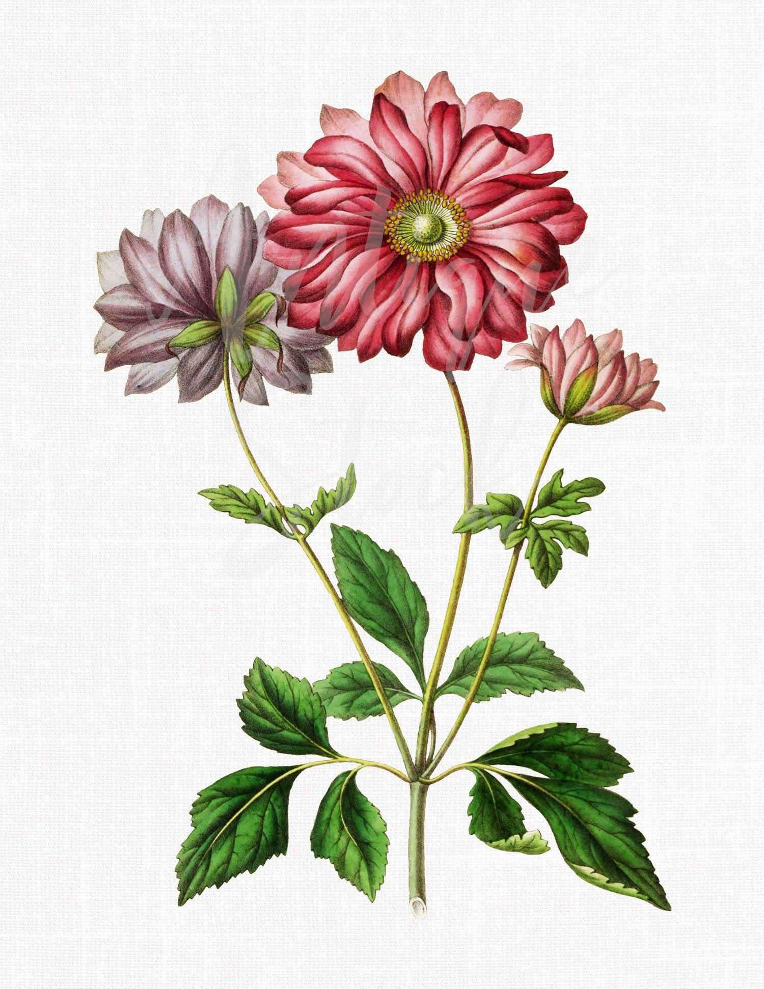 Watercolor Png Flower Anemone Scabiosa Botanical Etsy Botanical Illustration Digital Flowers Create Wedding Invitations