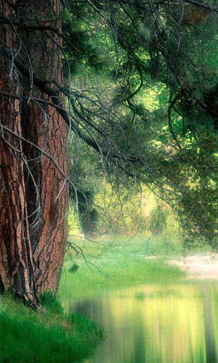 Free Samsung Gt S7562 Galaxy S Duos Natural View Animated Nature Nature Wallpaper Natural Wonders
