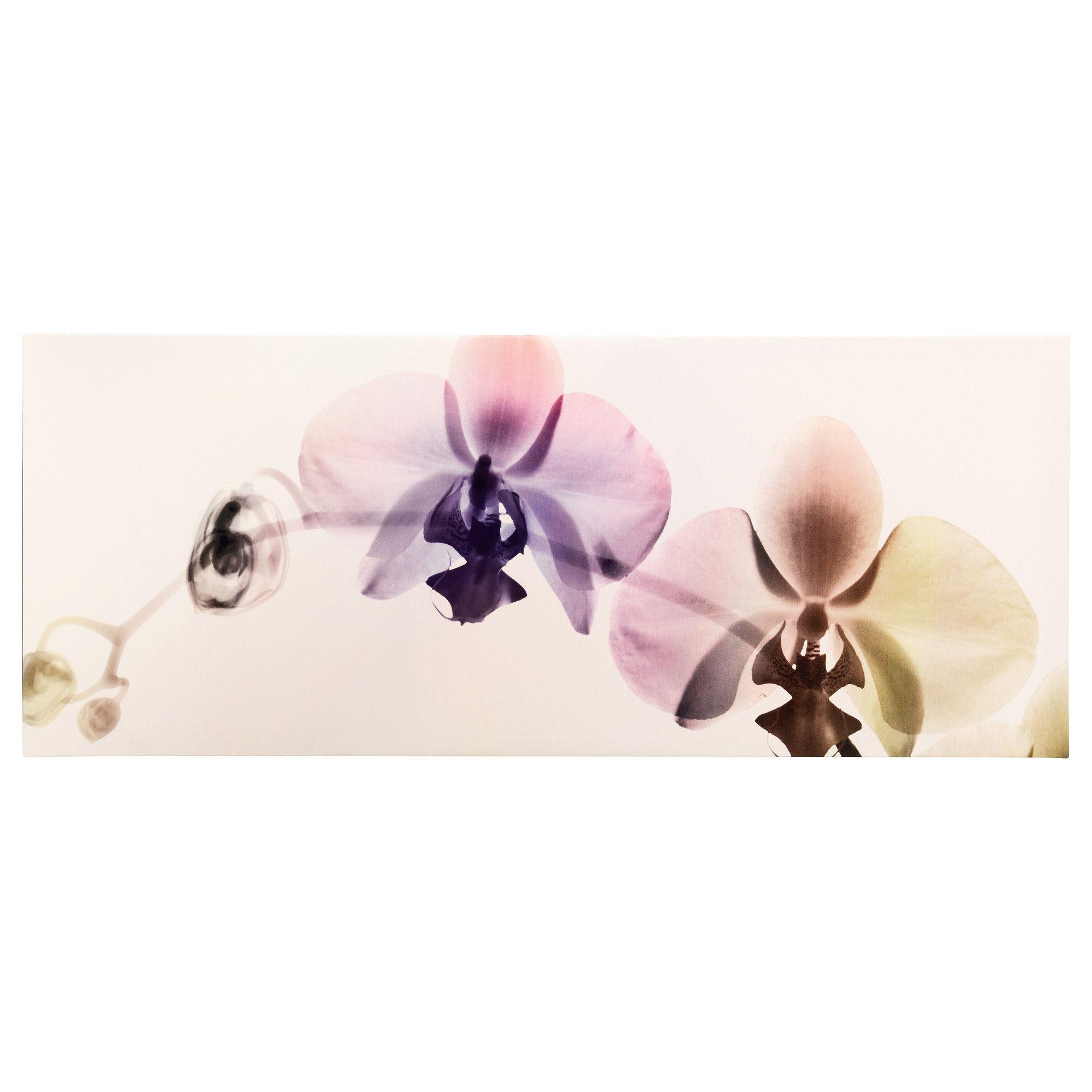 PJÄTTERYD Afbeelding zonder lijst Orchideeënspectrum 140 x 56 cm ...