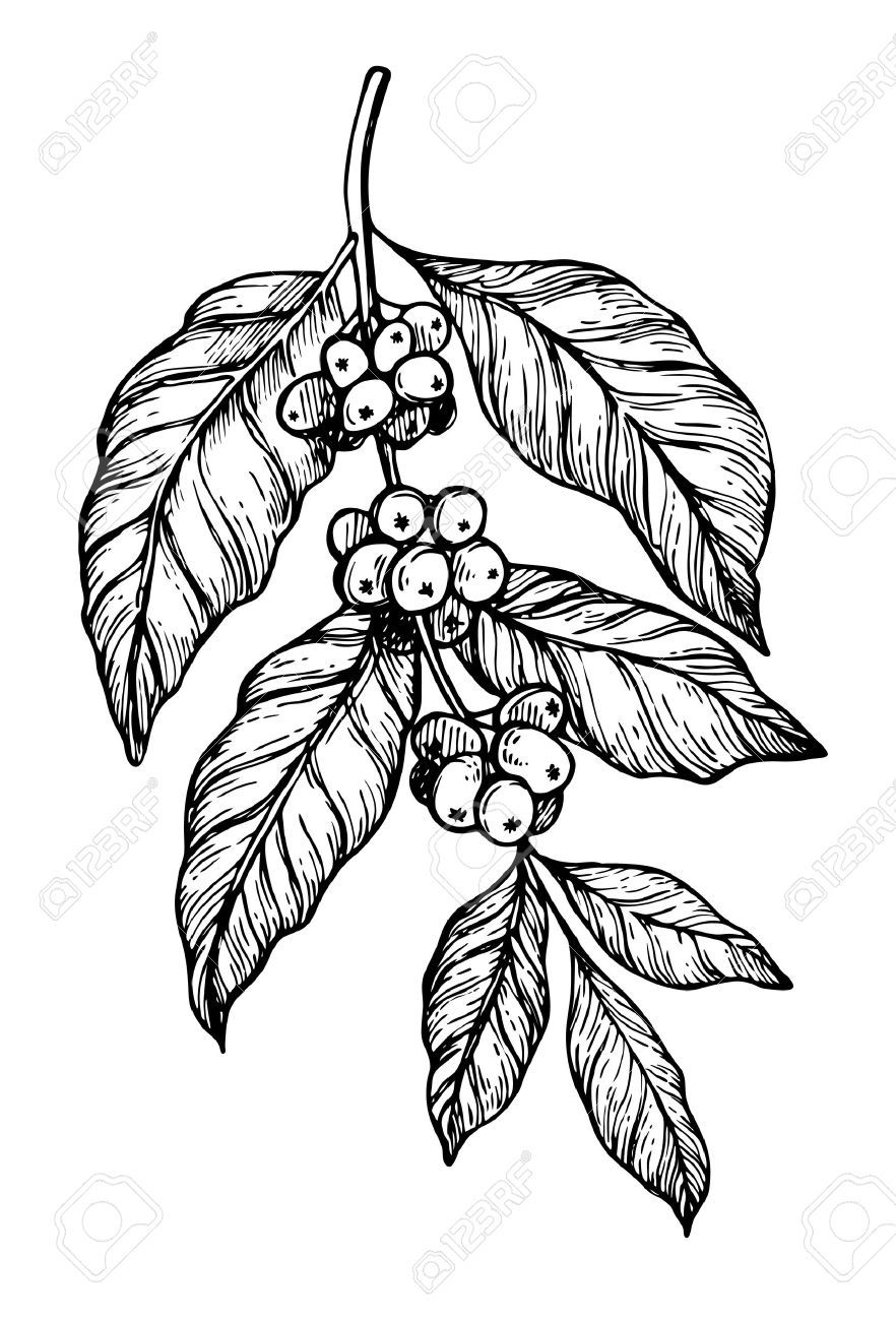 Stock Vector Coffee tattoos, Tattoo cafe, Coffee plant