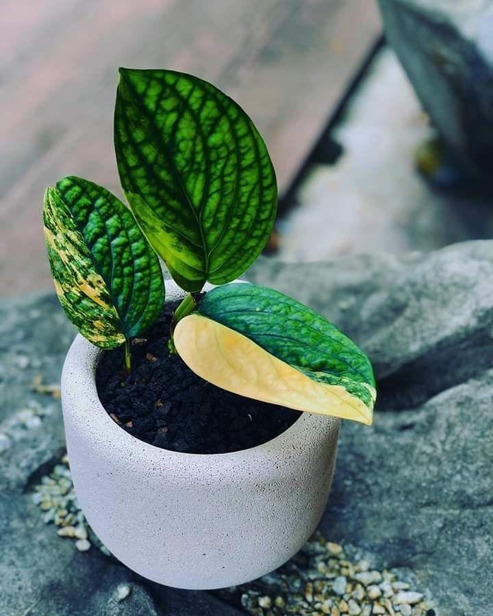 Plants Bank - Plants Database in 2020   Plants, Leafy ...