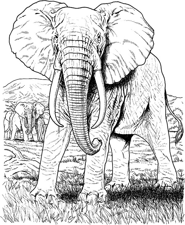 Pin By Coloringsky On 0005 Art Exhibition Elephant Coloring Page Elephant African Elephant