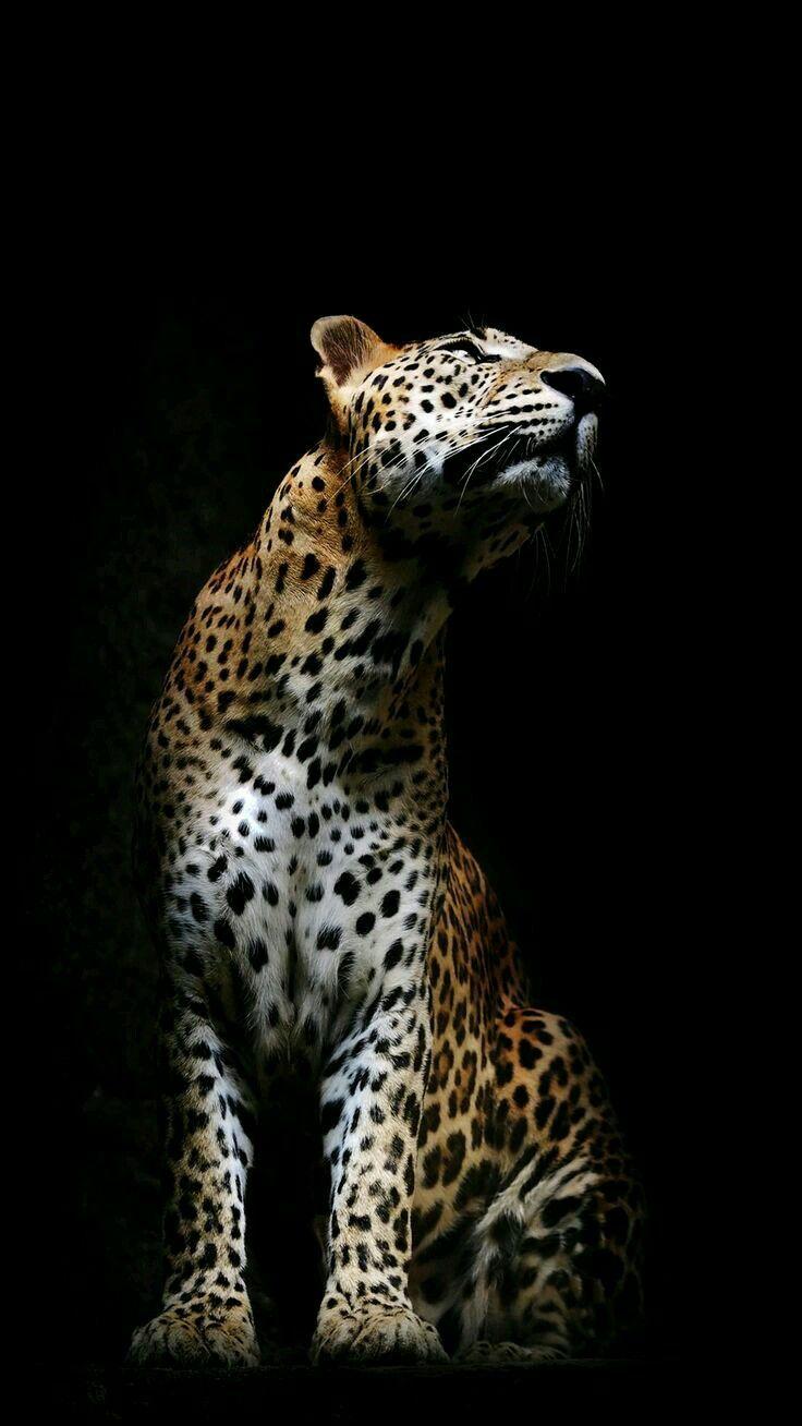Pin de Julian Bonilla en Fotografias !!   Pinterest   Animales ...