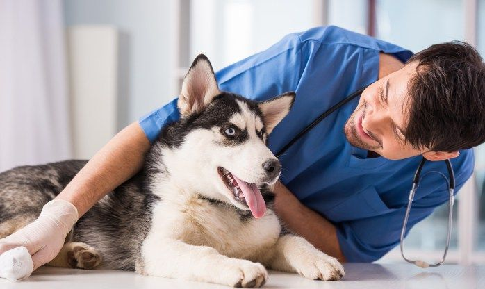 9 Ways To Get Cheap Or Free Veterinary Care For Your Pet Dog Training Near Me Free Vet Vets