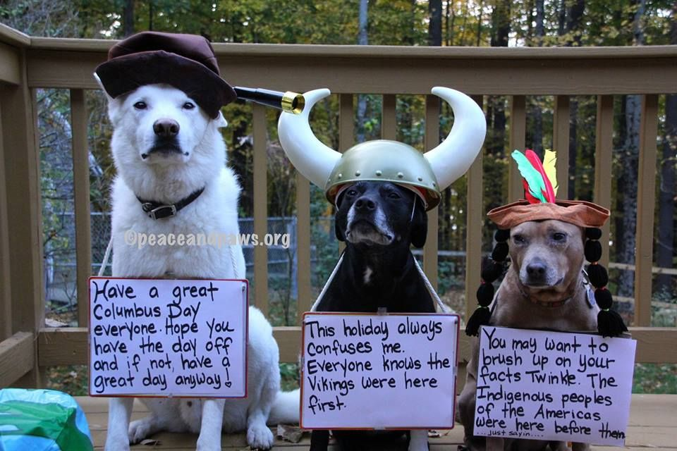 Happy Columbus Day Www Peaceandpaws Org Happy Columbus Day Paws Rescue Funny Animals