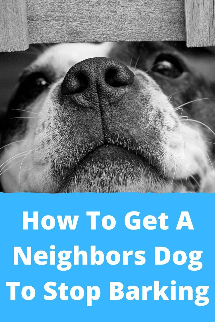 How to stop a neighbors dog from barking in 2020 dogs