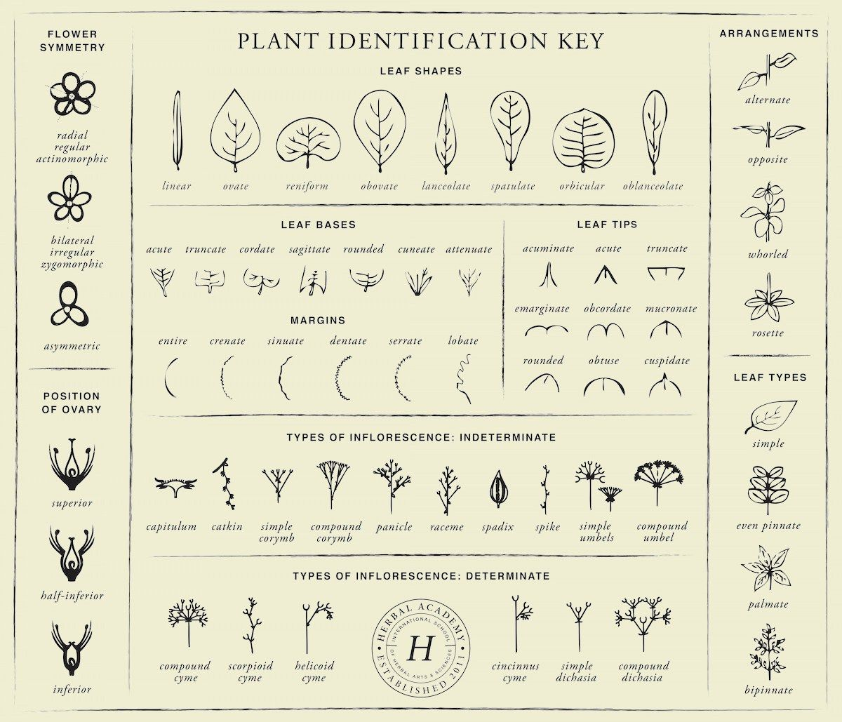 Plant Identification Key Download Herbal Academy Plant