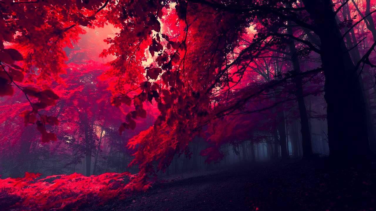 Collapsing Dream Chill Mix Uhd Wallpaper 3840x2160 Wallpaper Forest Wallpaper