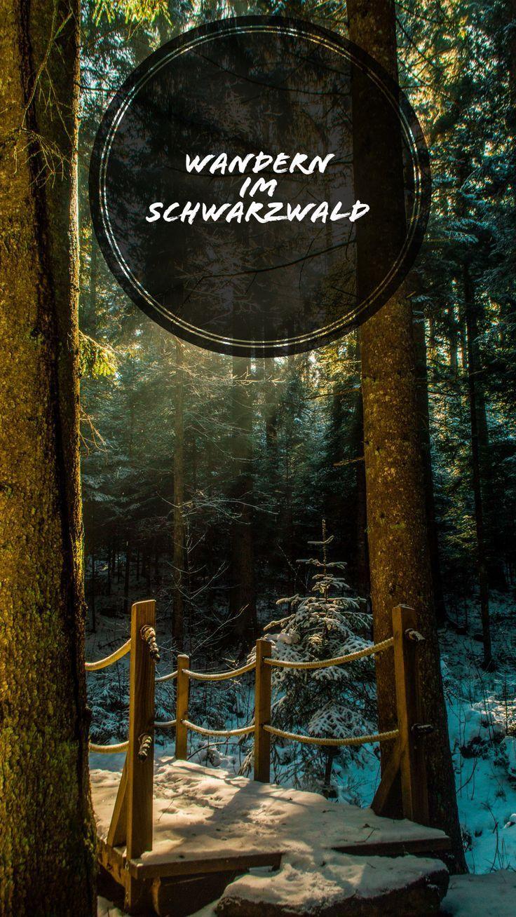 Explore la Selva Negra del Norte – Senderismo en el Waldachtal – El mundo de Sophia