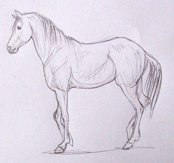 Como dibujar un caballo sencillo  Imagui  caballos  Pinterest