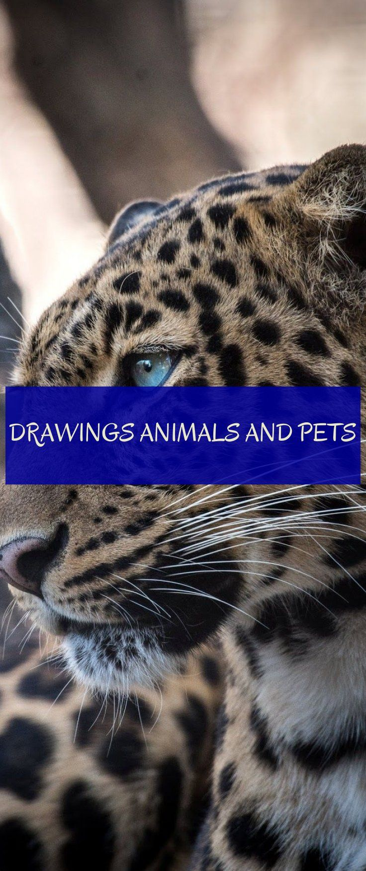 Dessins Animaux Et Animaux Drawings Animals And Pets