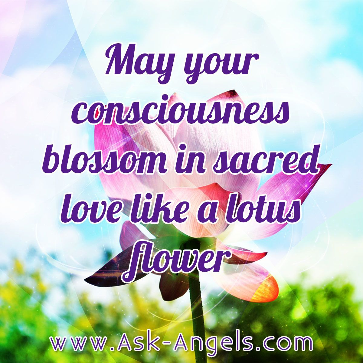 May Your Consciousness Blossom In Sacred Love Like A Lotus Flower
