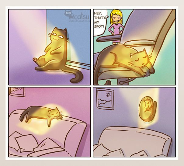 As Cat Lovers We Get Pretty Used To The Weird Quirks Our Feline Friends Have In Fact Things That Might Frighten Your Averag Cat Comics Crazy Cats Cat Owners