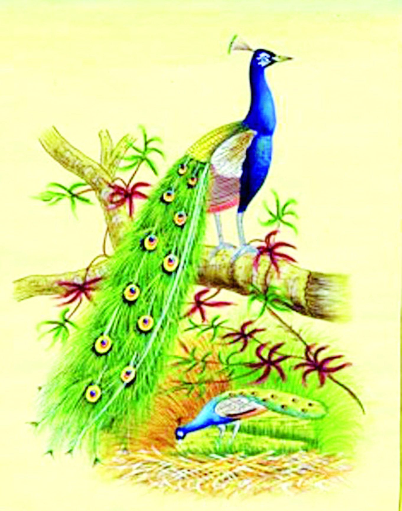 Peace symbols from different cultures gallery symbol and sign ideas the peacock a symbol of royalty taste of the past kemit the peacock originally a bird biocorpaavc