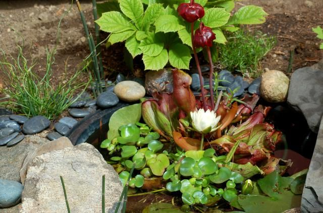 What Plants Can I Put Around My Pond