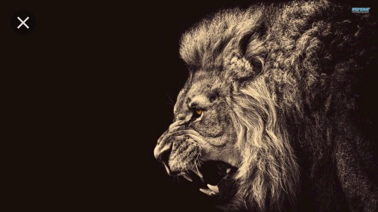 Omdat Me Achternaam Aslan Is En De Betekenis In Het Nederlands Leeuw
