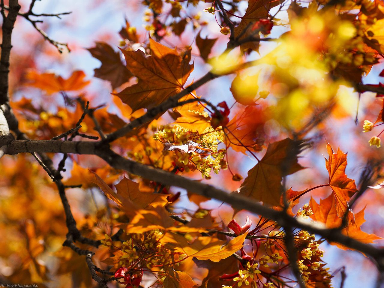 Красивые фотографии / Времена года / ОСЕНЬ http://forum.rise-n-fall.com/showthread.php?t=2207&page=18