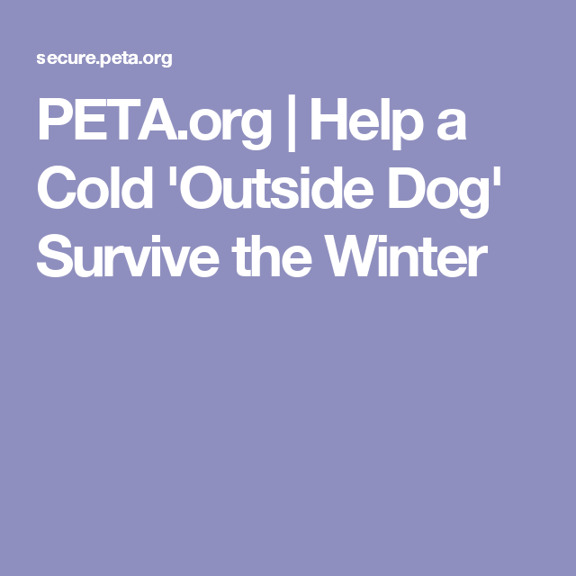 PETA.org | Help a Cold 'Outside Dog' Survive the Winter