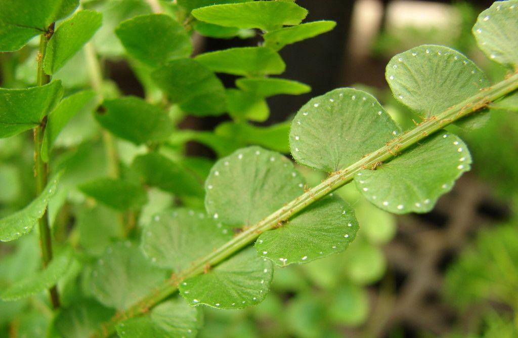 Non-Toxic Houseplants | Houseplants, Plant leaves, House ...