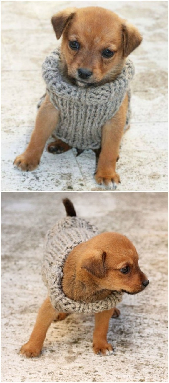 Knitted Dog Sweater Patterns You'll Love   Dog sweater ...