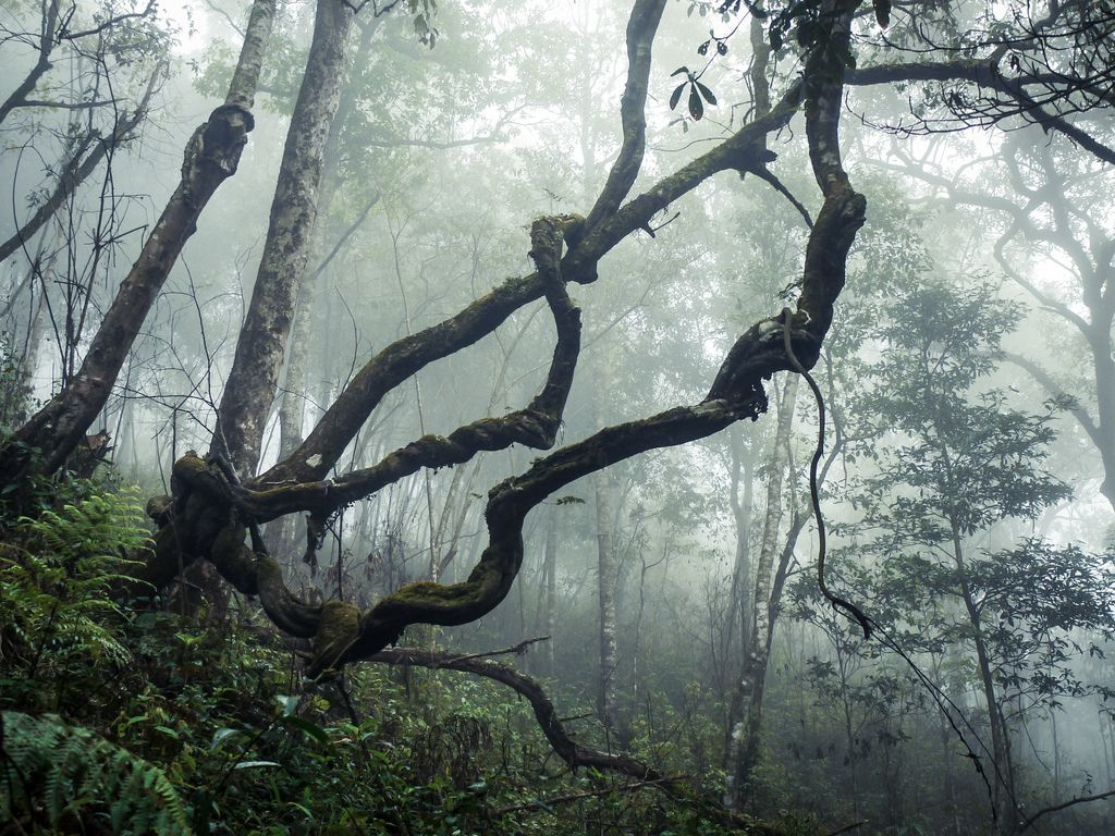 Forest in the lao highlands by danielfrauchiger