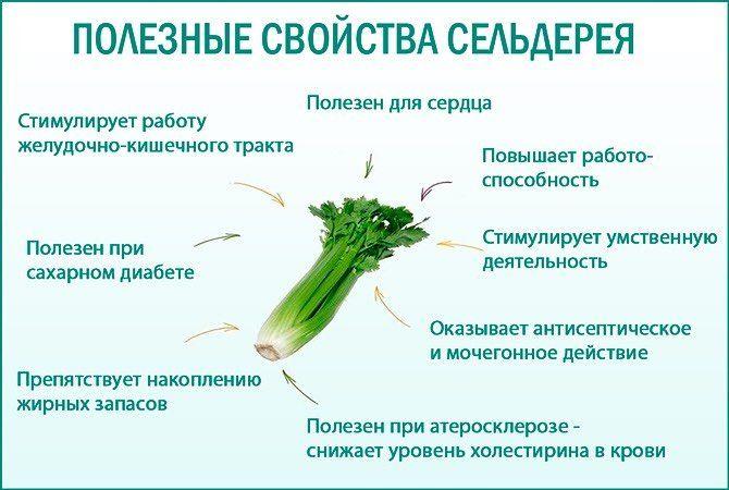 Сельдерей Для Похудения Мужчин.