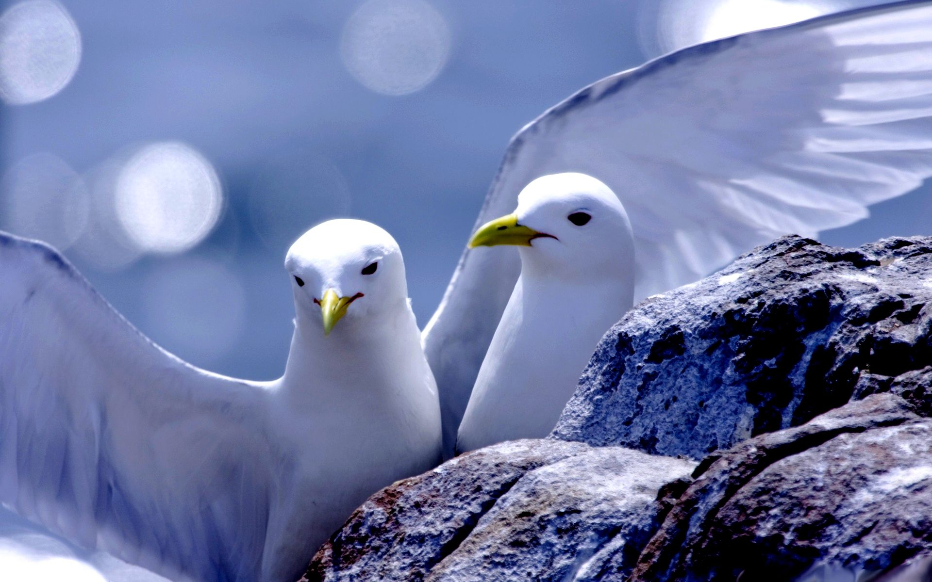 love birds wallpapers hd free - 391728 | animals ~ ♥ ~ doves