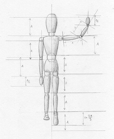 Photo of People draw – proportions man and woman – drawing course