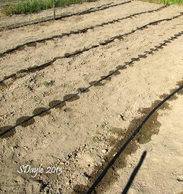Install a Drip System for Your Garden