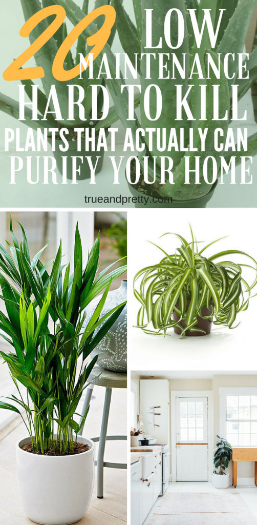 20 Air Purifying Plants You Need In Your Home That'll Be Hard To Kill - True & Pretty
