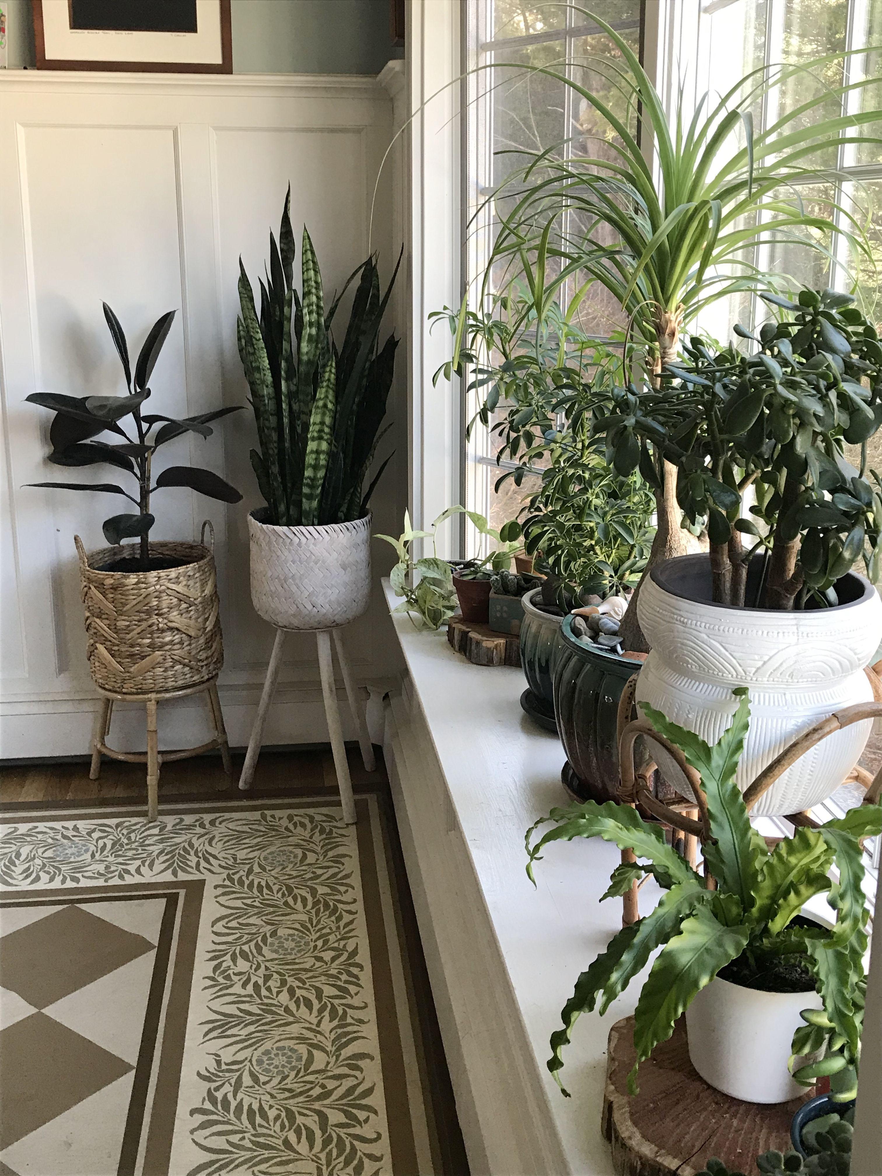 Indoor Plants In 2020 Indoor Plants Bedroom Plant Decor Indoor Living Room Plants