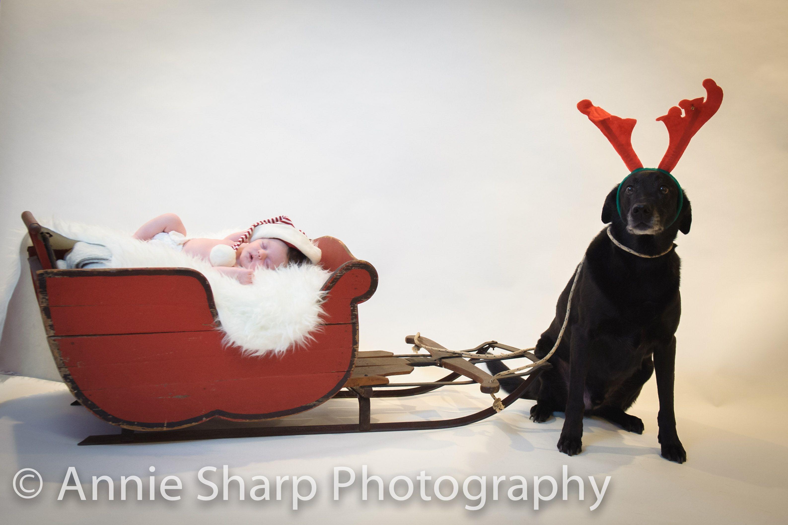 Annie Sharp Photography Llc Baby Christmas Photos Newborn Christmas Newborn Christmas Pictures