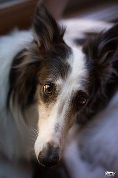 Pin By Petsadelic On National Dog Day Dog Breeds Beautiful
