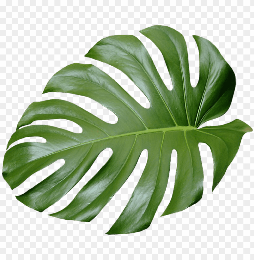 Tree No Leaves Png For Free Tropical Leaves Png Transparent Leaf Photography Tropical Leaves Tropical Flowers