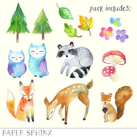 Watercolor Woodland Animals Clipart Forest Animals Clip Art Etsy In 2021 Animal Clipart Woodland Illustration Animals