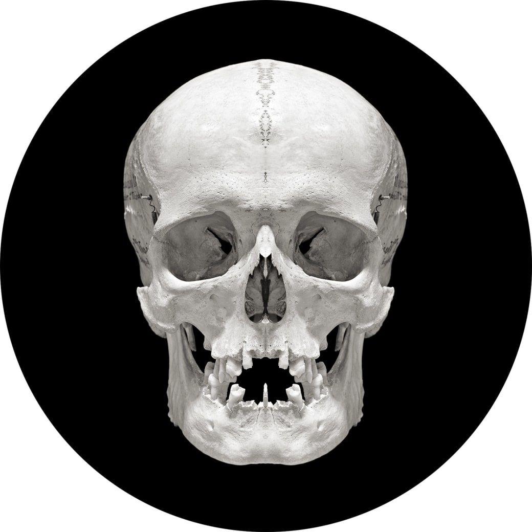 19++ Skull photographs ideas