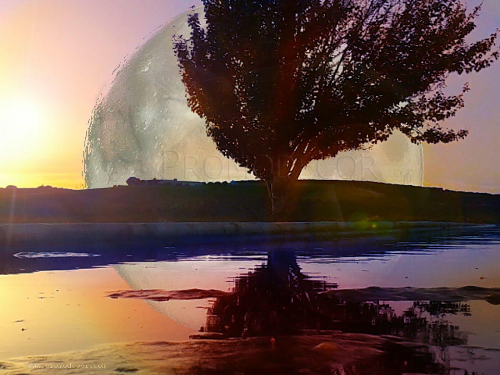 Nuevo diseño: Estanque lunar ~ Promodecor
