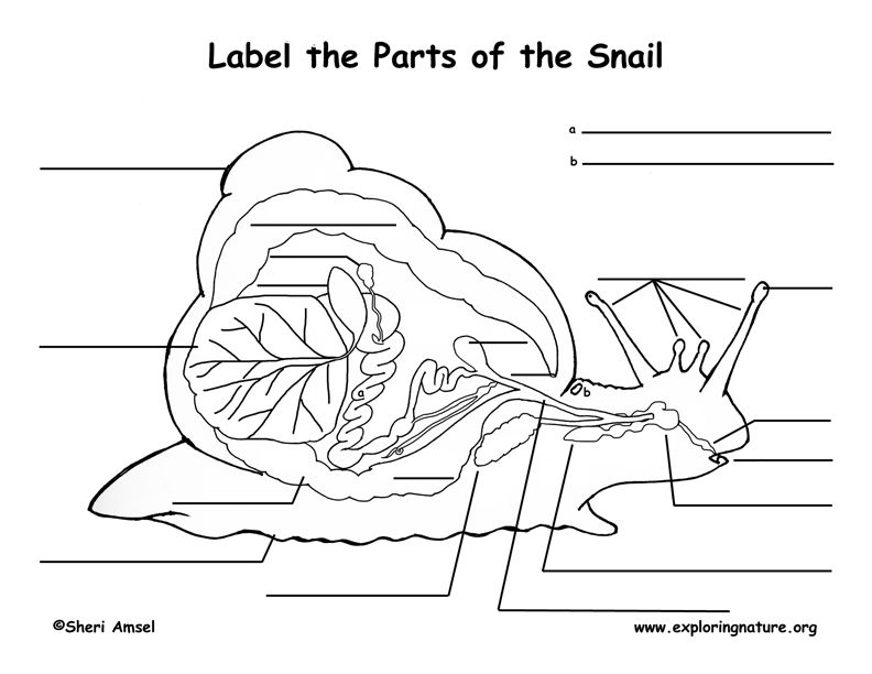 label parts of a snail - google search