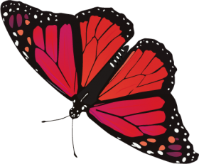 Butterfly Png Image Free Picture Download Butterfly Watercolor Butterfly Art Butterfly Pictures