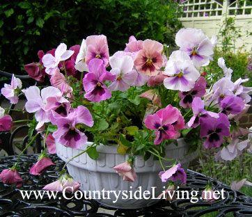 композиция из садовых цветов своими руками фото