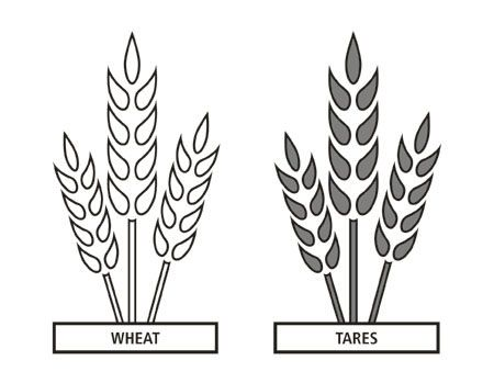 Wheat And Tares Teacher Manual Doctrine And Covenants