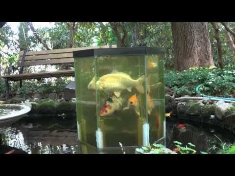 the fish penthouse an above water aquarium youtube