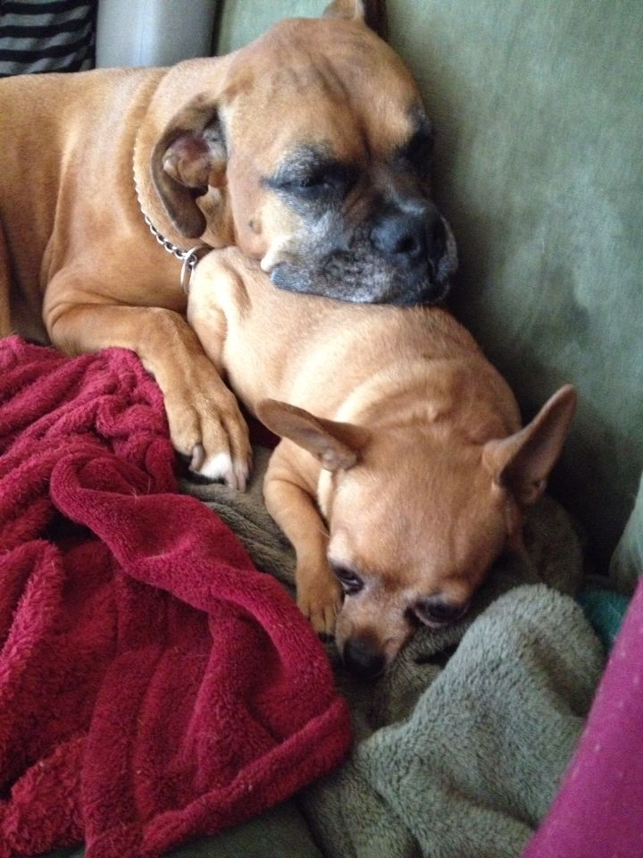 """Thank God, Gracie's head """"rests"""" lighter than one would think on little Lilly!!  TC"""