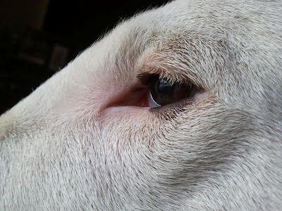 Expressive Eyes