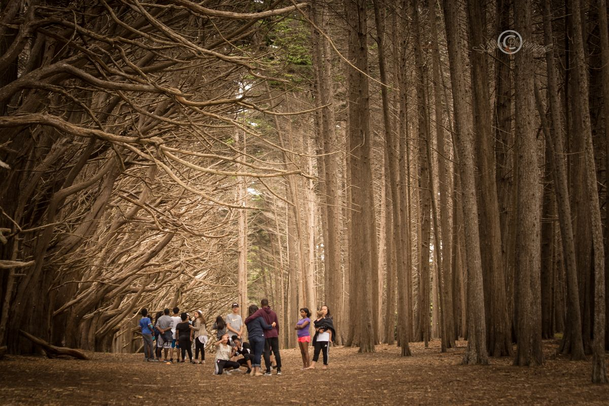 Explore The Cypress Tree Tunnels At Moss Beach Moss Beach Cypress Trees Cypress Tree Tunnel