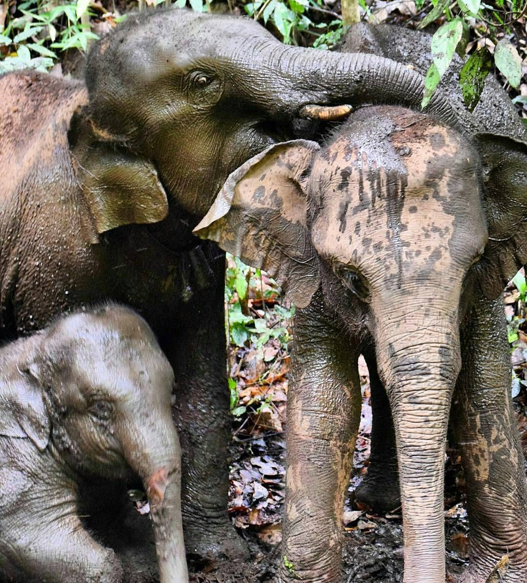 I Love Them From Mahoutselephants Family Time Is The Best Time For Info About Promoting Your Elephant Images Elephant Adopt An Elephant